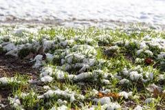 Neve na grama verde na natureza Imagem de Stock Royalty Free