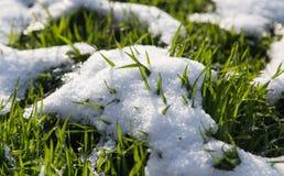 Neve na grama verde na natureza Imagens de Stock Royalty Free