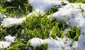 Neve na grama verde na natureza Fotos de Stock