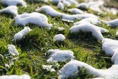 Neve na grama verde na natureza Fotografia de Stock Royalty Free