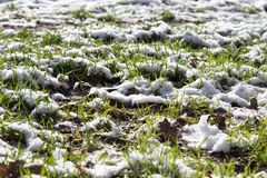 Neve na grama verde na natureza Imagens de Stock