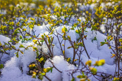 Neve na mola imagens de stock