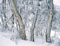 Neve na montagem Canobolas N alaranjado S W fotografia de stock