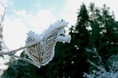 Neve na planta Fotografia de Stock