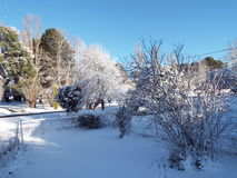 Neve nas árvores Foto de Stock Royalty Free
