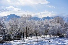 Neve nas árvores com Mountain View Fotos de Stock Royalty Free