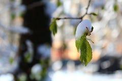 A neve nas folhas imagens de stock royalty free