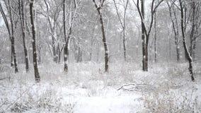 Neve nas madeiras Floresta decíduo usual no inverno vídeos de arquivo