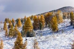 Neve nas montanhas Imagens de Stock