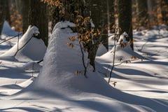 Neve nel paesaggio di inverno della foresta Fotografia Stock