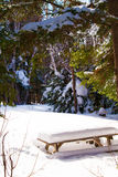 Neve nel parco Immagine Stock