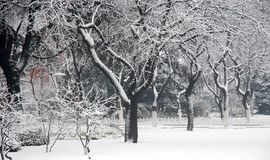 Neve nell'università di fudan Fotografie Stock Libere da Diritti