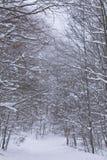 Neve nella foresta fotografie stock libere da diritti