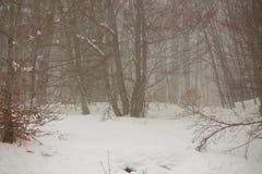 Neve nella foresta fotografia stock