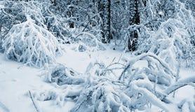 Neve nella foresta di inverno. Fotografia Stock
