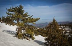 Neve nelle montagne del Cipro Fotografia Stock Libera da Diritti