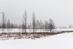 Neve no campo com as árvores no campo Imagem de Stock