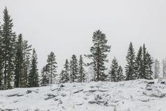 Neve no campo com as árvores no campo Imagens de Stock Royalty Free