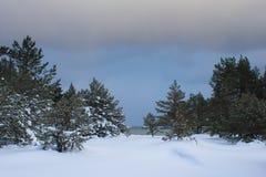 Neve no inverno foto de stock