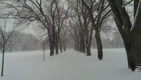 Neve no Oval de CSU imagens de stock royalty free