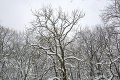 Neve no parque em Sófia, Bulgária 29 de dezembro de 2014 Fotografia de Stock Royalty Free