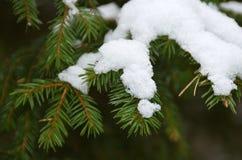 Neve no ramos verdes de uma árvore de Natal fotos de stock