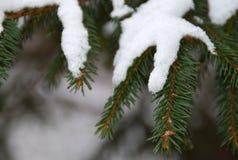 Neve no ramos verdes de uma árvore de Natal foto de stock