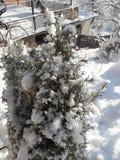 Neve nos alecrins em meu jardim orgânico nevado fotos de stock