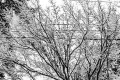 Neve nos ramos e nos fios 2 fotografia de stock royalty free
