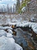 Neve pantanosa Fotografia de Stock