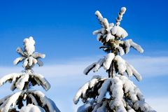 Neve pesante Fotografia Stock Libera da Diritti