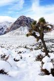 Neve pesante in valle di Las Vegas Immagini Stock Libere da Diritti