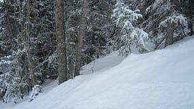 Neve profunda em um dia do pó Foto de Stock