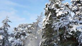 Neve que cai da árvore das agitações filme