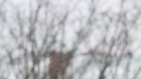 Neve que cai em um dia de inverno filme