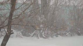 Neve que cai lentamente no fundo das árvores filme