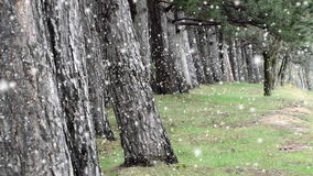 Neve que cai, madeiras naturais velhas da floresta vídeos de arquivo