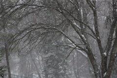Neve que cai nas madeiras foto de stock royalty free