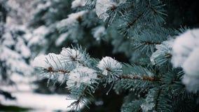 Neve que cai nos abeto video estoque