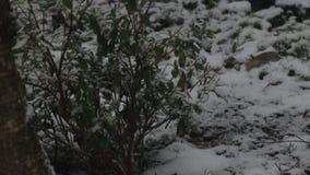 Neve que cobre lentamente o jardim vídeos de arquivo