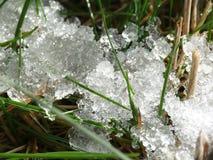 Neve que derrete em rass Fotos de Stock