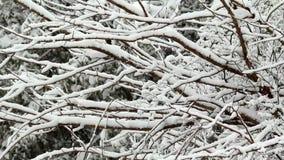 Neve que falha na árvore video estoque
