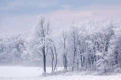 A neve reuniu árvores Fotos de Stock