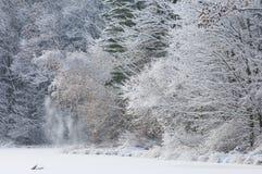 A neve reuniu árvores Imagens de Stock Royalty Free