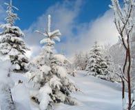 Neve scintillante Fotografia Stock