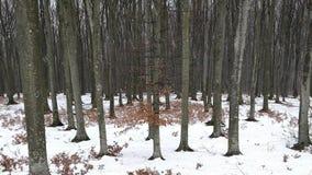 Neve sobre a floresta video estoque
