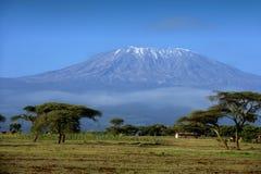 Neve sopra il Kilimanjaro in Amboseli fotografia stock libera da diritti