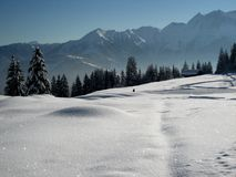 Neve Sparkling Fotografia de Stock Royalty Free