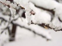 Neve su brunch 5 fotografia stock libera da diritti