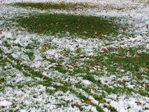 Neve su erba verde Fotografie Stock Libere da Diritti
